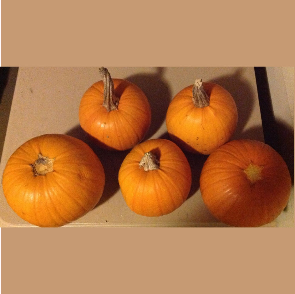Five small pumpkins